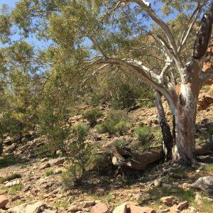 Ruth le Cheminant Flinders Ranges #3