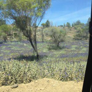 Ruth le Cheminant Flinders Ranges #4