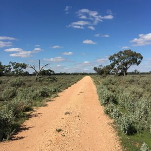 The road from the front gate leading to the homestead, Evandale