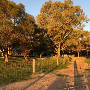 Late afternoon, Evandale NSW