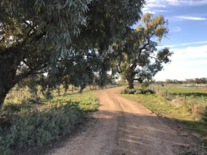 The road to the front gate, Evandale