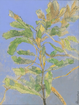 Ruth le Cheminant Foliage of the Old Man Banksia 2017 acrylic paint and pen on board 30cm x 23cm