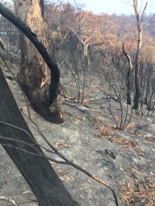 After the bushfire Mt Victoria 2020 1