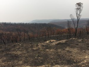 After the bushfire Mt Victoria 2020 5